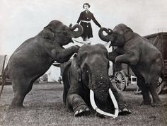 "With the Barnes Show two years earlier (1922) Babe Gardner appeared in a more modest manner. Probably more funds available for wardrobe with the Corporation.  Elephants are ""Barney"", ""Tusko"" and ""Vance""."