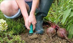 September garden and gardening ~~ checklist