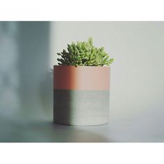 HAPPY SPRING EVERYONE   Some pots still on sale at http://ift.tt/1MWuFpQ  #planters #concretehomewares #concretelove #concreteplanters #succulents #belushi #concretepots #homewares #handmade #concrete by belushihm