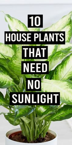 I love to have greenery in my workplace, who doesn't? But, lack of sunlight makes these plants look dull and eventually they die. #houseplants #plants #sunlight