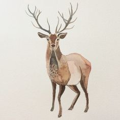 watercolor images of deer - Google Search