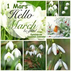 Hello March, Calendar, Jar, Seasons, Plants, Collages, Spring, Cards, Season Calendar
