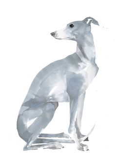 """""""how about the whippet in a new colour way? Absolutely most definitely want a blue whippet one day"""" Blue Whippet, Whippet Dog, Greyhound Art, Italian Greyhound, Watercolor Paintings Of Animals, Animal Paintings, Love Dogs, Art Et Illustration, Dog Portraits"""