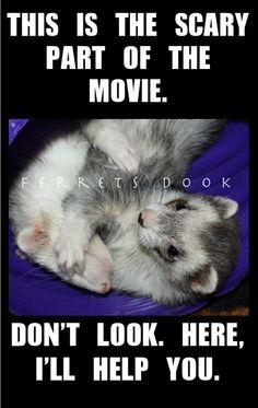 #ferrets  https://www.facebook.com/YourEverydayFerretFerretsDook