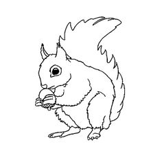 Dessin d'écureuil #149 - Cliquez pour imprimer   Écureuils   Pinterest   Coloriage écureuil ...