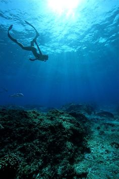 Learn to free dive