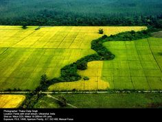 Mustard & Wheat Crop Field ©Thakur Dalip Singh