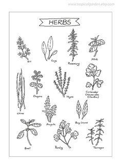 Herbs-Kitchen Art  #TuscanyAgriturismoGiratola