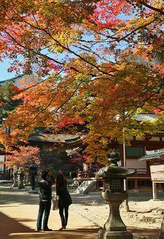 「高野山の秋」