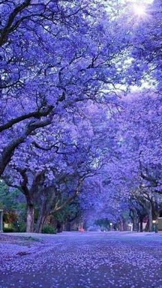 Beautiful World, Beautiful Places, Beautiful Pictures, Trees Beautiful, Beautiful Nature Wallpaper, Beautiful Landscapes, Tree Lined Driveway, Tree Tunnel, Colorful Trees
