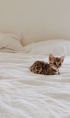 Kitten on the bed
