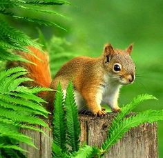 Great squirrel picture !