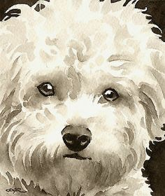 BICHON FRISE Watercolor Dog ART Signed by Artist DJR