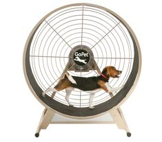 """Pinner stated: """"Hey, you're not a cat!""""Wonder if our dog would use a cat wheel TOO?? Course she'd have to be able to carry her frisbee on it too!! #dogs #cats #CatWheel"""