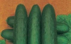 Cetrioli ripieni (pepinos rellenos)