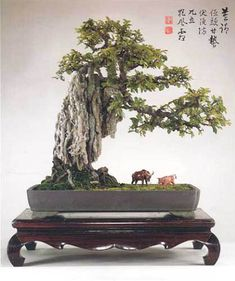 I am in love with Bonsai, can't wait to start this hobby :)