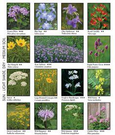 97 Best Native Missouri Plants Images