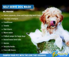 22 best self service dog wash images on pinterest dog wash let your best friend smell great and have a wonderful washing your dog to solutioingenieria Gallery