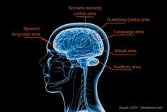 Breakthrough Study Reveals Biological Basis for Sensory Processing Disorders in Kids | The Sensory Spectrum