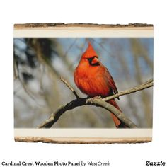 Cardinal Crest Wooden Photo Panel