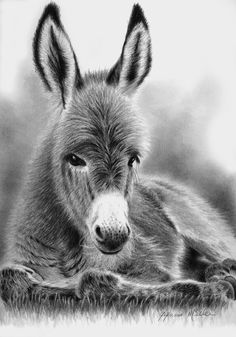 Animal Drawings Buttercup by Glynnis Miller Pencil ~ 10 x 7 Farm Animals, Animals And Pets, Cute Animals, Horse Drawings, Animal Drawings, Beautiful Horses, Animals Beautiful, Donkey Drawing, Cute Donkey