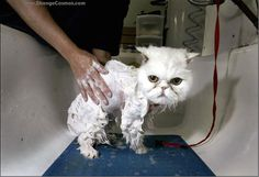 15 Reasons Why Wet Cats Are Hilarious 26 - https://www.facebook.com/different.solutions.page