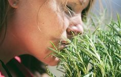 Sniffing Rosemary Can Increase Memory By - Collective Spark Rosemary Health Benefits, Increase Memory, Cocina Natural, Medicinal Herbs, Shakespeare, Natural Remedies, Herbalism, Memories, Northumbria University