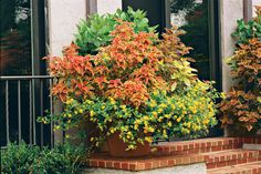 Spectacular Container Gardens: Coleus and lantana fit right in with the South's increasing appetite for hot, cheery, assertive colors that stand up to heat and humidity. Note: 10 Plants that Beat the Summer Heat Container Flowers, Container Plants, Container Gardening, Coleus, Party Fiesta, Pot Plante, My Secret Garden, Living At Home, Garden Planters