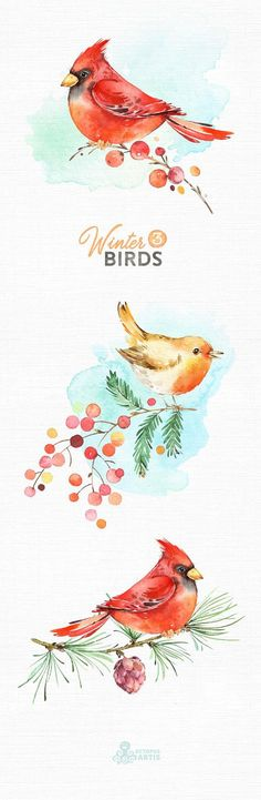 This Winter birds 3 set of 15 high quality hand painted watercolor images with birds and branches. Perfect graphic for christmas holiday, wedding invitations, greeting cards, photos, posters, quotes and more. ----------------------------------------------------------------- This listing