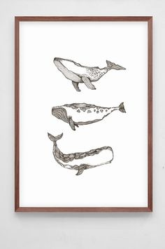 Grandpa - Poster Whales. Illustration by Fanny Schultz