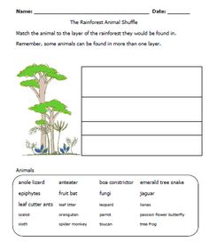 rainforest worksheet-layers: Must add to my Unit
