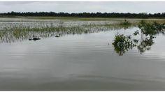 Más de doscientas tareas de arroz bajo agua en municipio El Factor de Nagua