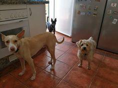 Ratos en casa con Curro, Mia, Lana, Avanti y Chico 07/17