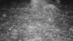 Loomad rajakaameras / Trail cam video - Ingo Valgma Dark Night, Invite, Trail, Group, Image, Friends, Amigos, Boyfriends