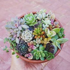 Similar bowl of Succulents for coffee table                                                                                                                                                                                 More