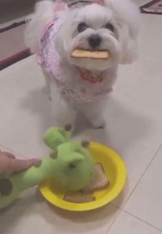 Funny Animal Jokes, Cute Funny Animals, Funny Animal Pictures, Animal Memes, Cute Baby Dogs, Cute Cats And Dogs, Cute Puppies, Funny Dog Videos, Funny Dogs
