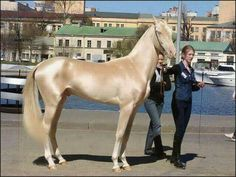 Gorgeous Horse! Look at that coat!
