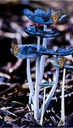 Butterflies Blue Background