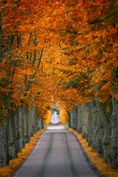 Takes my breath away! Perfect Fall Drive in the Country / Images of Fall