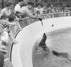 A zookeeper feeds the seals at the Belle Isle Zoo in 1960.