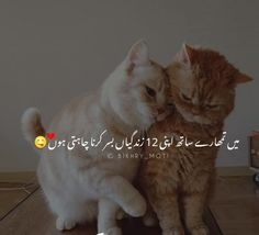 Adeefa 💞💖💞 Love Romantic Poetry, Cats, Animals, Gatos, Animales, Animaux, Animal, Cat, Animais