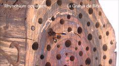 Avispas solitarias, cazadoras de orugas. (hotel de insectos) Bug Hotel, Wasp, Caterpillar, Hotels, Crates