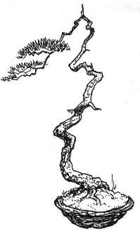 kengai bonsai - Buscar con Google