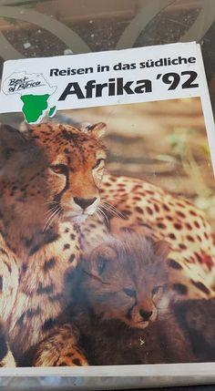 Trek, Lion, Animals, Leo, Animales, Animaux, Lions, Animal, Animais