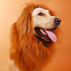 Lion Mane Halloween Costume For Dogs