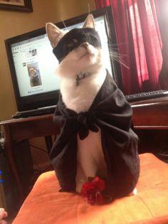 Zorro Cat Photo via Imgur