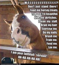 A horses life