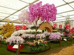 Orchid display at the Chelsea flower show