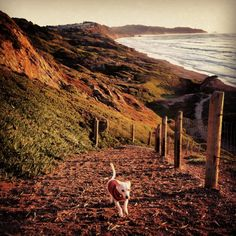 This South San Francisco dog park is a heaven for off-leash dog walkers. With miles of beautiful beach for your dog to explore, and beautiful views for you to enjoy, this area is celebrated as one of the best dog parks in the city.