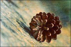 Pine cone, WoodWork - Photo Gallery Slawek Brodzicki at slawekbrodzicki.com